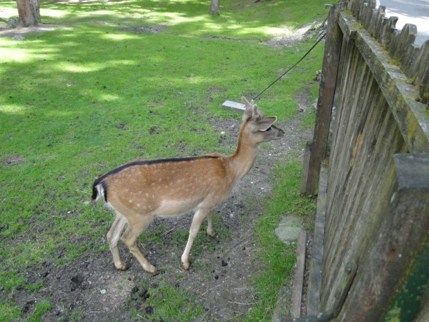 This is Bambi in Austria yesterda